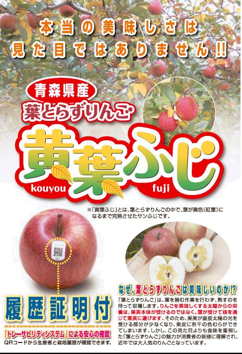 青森県産葉とらずりんご黄葉ふじ